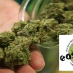 Compra Online Easyjoint Roma grow shop roma cannabe canapa cbd easyjoint Grow Shop Roma Cannabe Canapa Cbd Easyjoint easyjoint dove comprare online shop roma 150x150